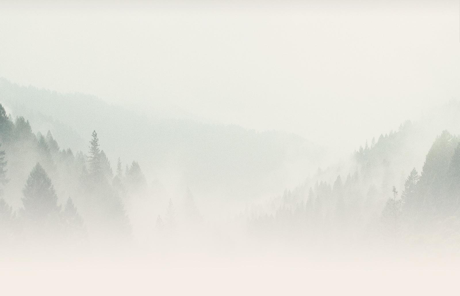Hazy trees